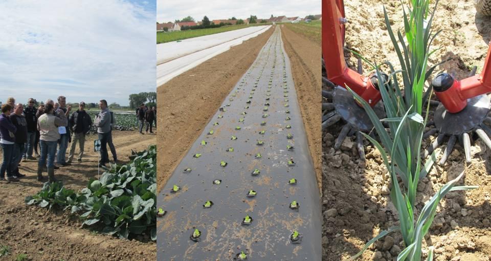 DEPHY : le réseau de fermes « Légumes frais »
