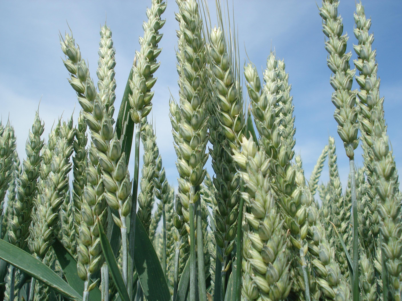 Parution du décret faisant appliquer le dispositif des certificats d'économie de produits phytosanitaires (CEPP)