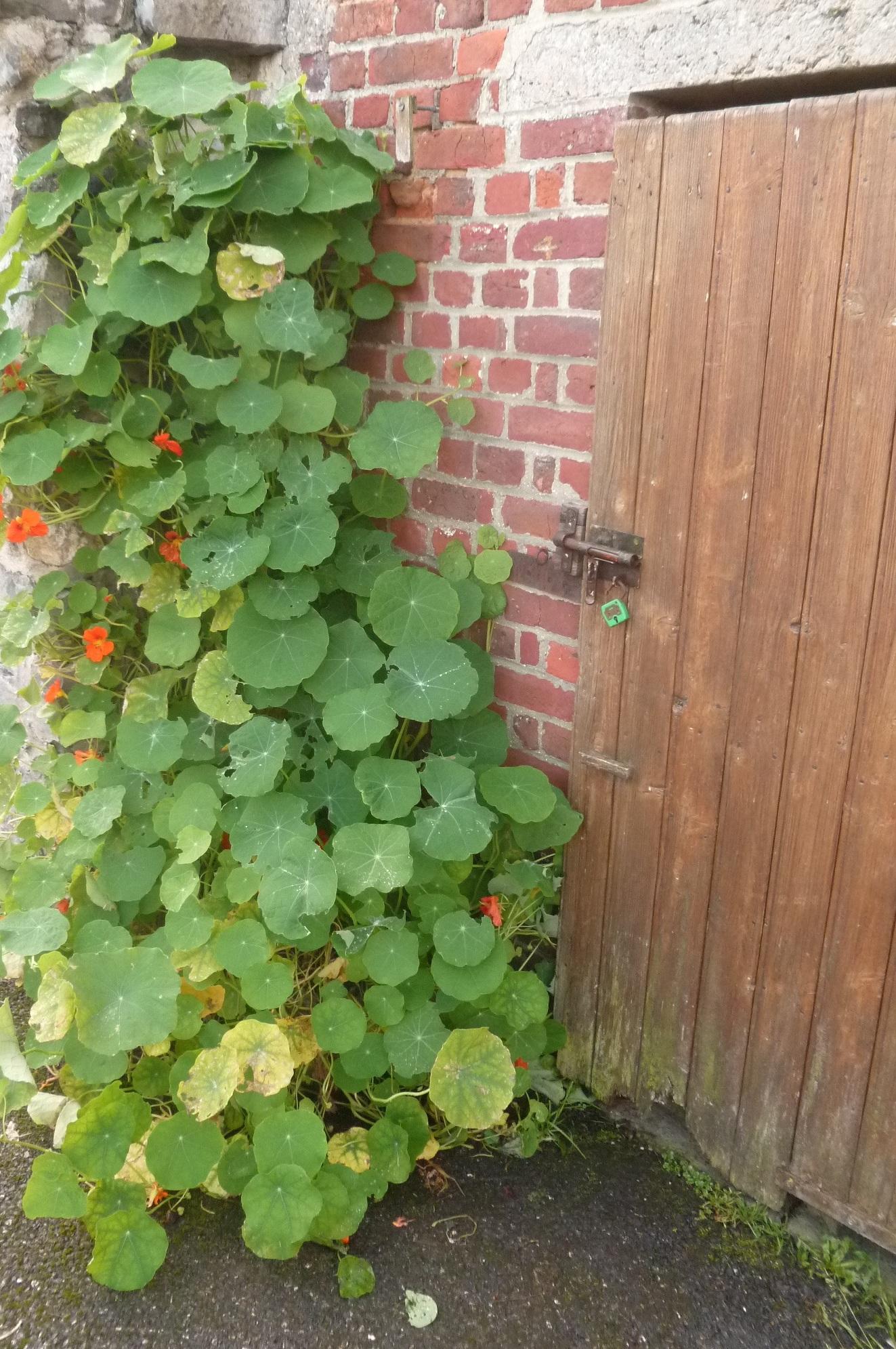 «Objectif Jardins au Naturel»: une lettre d'information pour les jardiniers-amateurs et collectivités