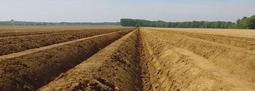 Un groupe 30 000 essaie le désherbage 100% mécanique en pomme de terre
