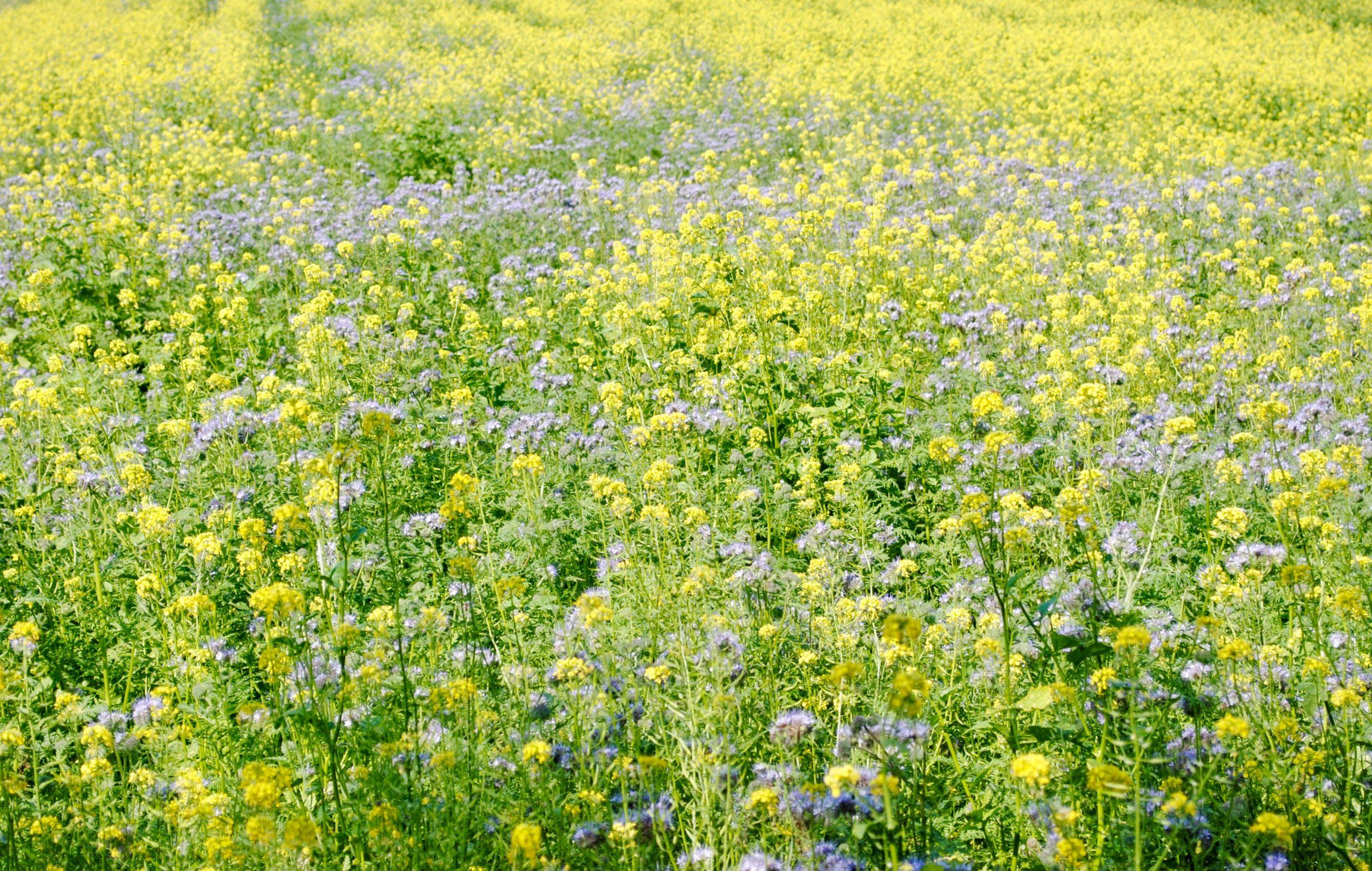 L'Agro-écologie fait sa place dans les Hauts-de-France