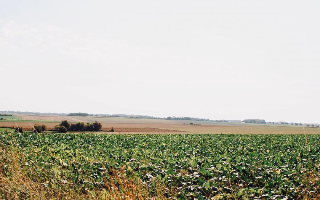 Diversification en grandes cultures et réduction des pesticides