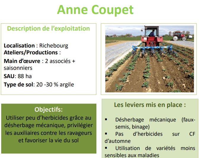Témoignage d'Anne Coupet, productrice de choux-fleurs à Richebourg